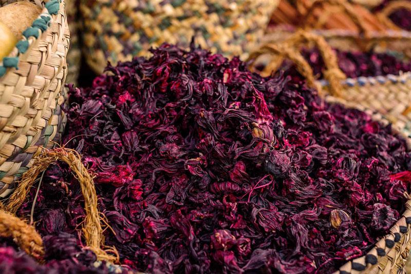hibiscus-tonantzin