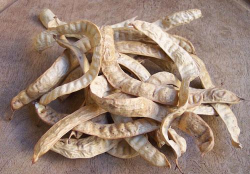 mezquite-tonantzin