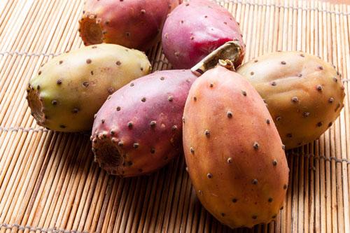prickly-pear-tonantzin