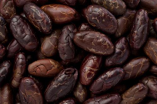 cacao-tonanzin-2